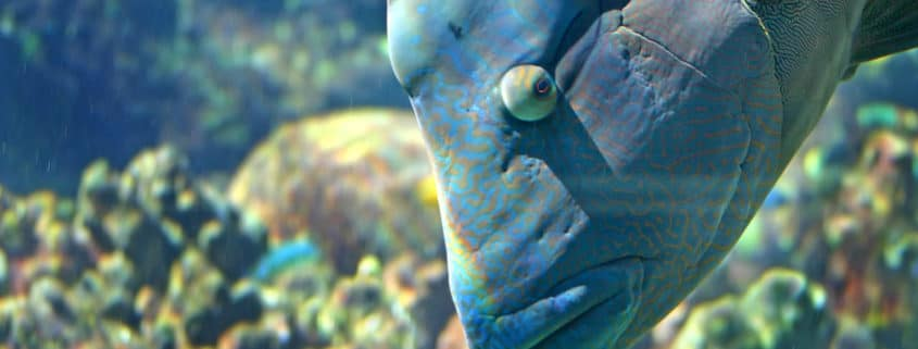 best spearfishing knife frees blue grouper fish