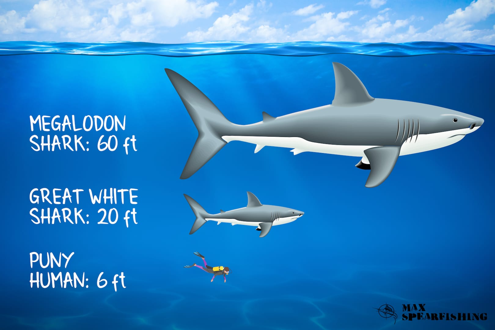 fun facts about the megalodon shark
